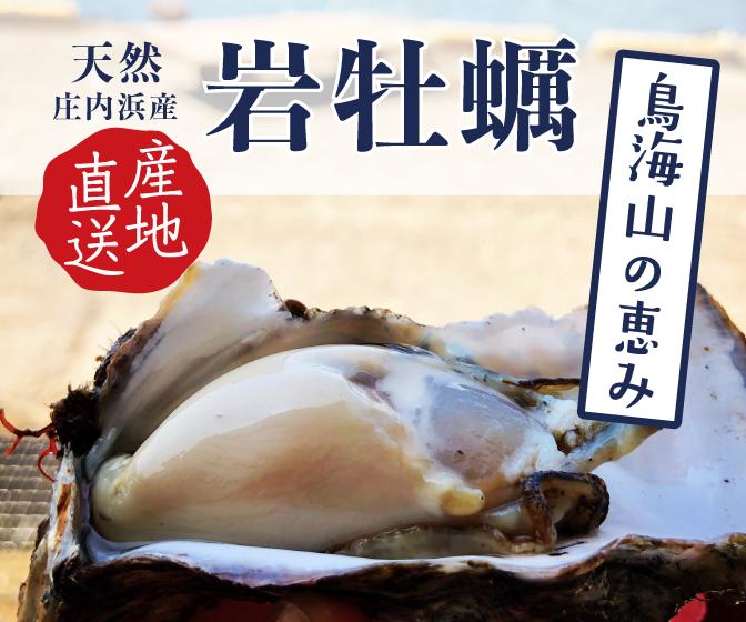 今が旬!!庄内浜の天然岩牡蠣!